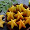 15 bài thuốc dân gian chữa bệnh từ trái khế