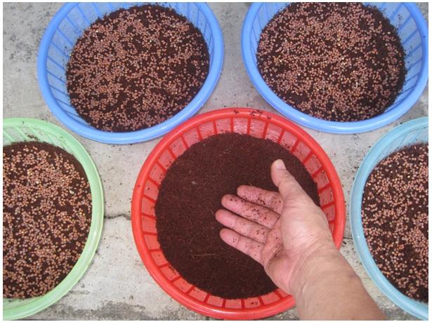 buoc-4-trong-rau Hướng dẫn cách trồng rau mầm