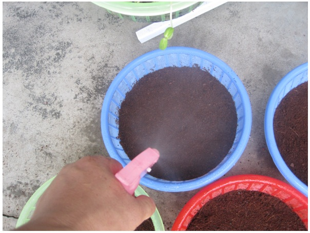 buoc-5-trong-rau Hướng dẫn cách trồng rau mầm