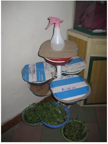 buoc-6-trong-rau Hướng dẫn cách trồng rau mầm