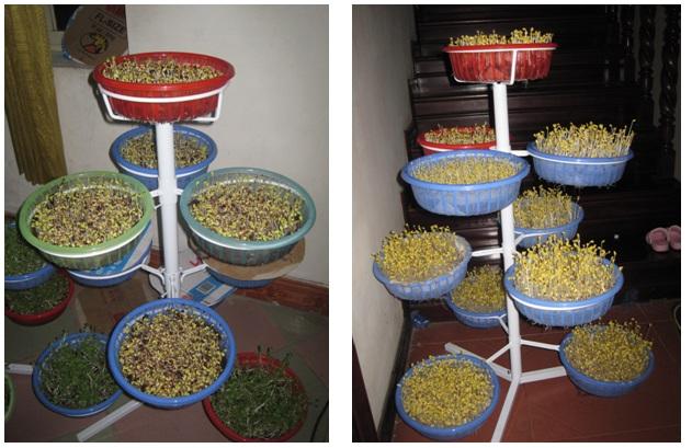 buoc-7-trong-rau Hướng dẫn cách trồng rau mầm