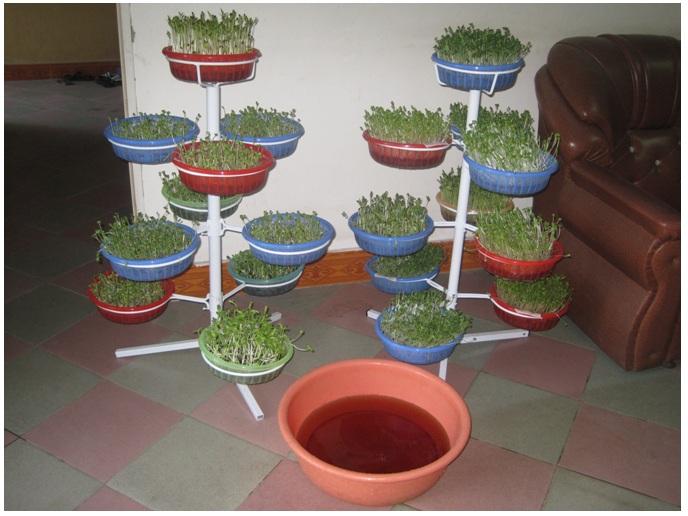 buoc-8-trong-rau Hướng dẫn cách trồng rau mầm