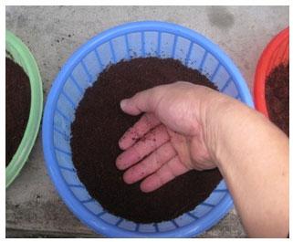 huong-dan-trong Hướng dẫn cách trồng rau mầm