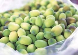 hatsen Giá trị dinh dưỡng và y học của Cây Sen