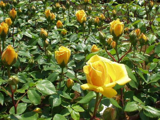 Vườn hoa tươi Đà Lạt