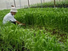 images Nguyên tắc cơ bản trong kỹ thuật trồng rau an toàn