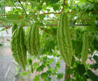 khoqua-tc1 Cách trồng bí đỏ an toàn
