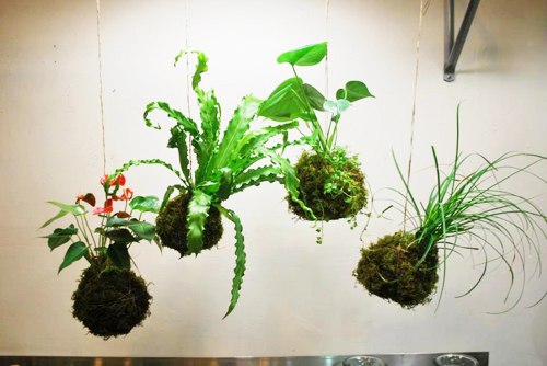 kiengtreo-8 Những điều cơ bản khi trồng lan rừng