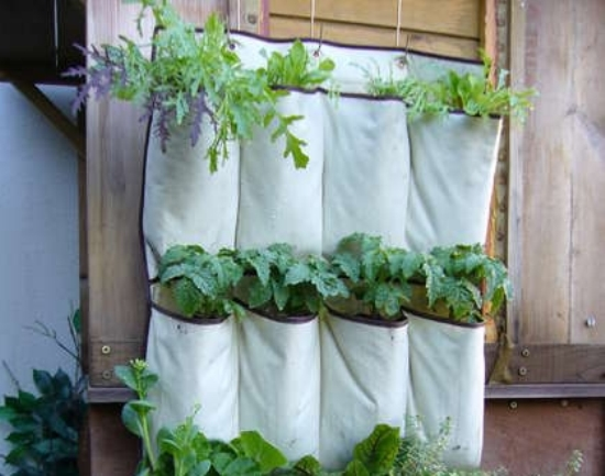 ý tưởng trồng cây
