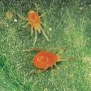 nhendo Cách phòng trừ bệnh hại rau do nấm trong đất