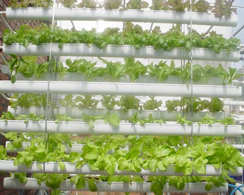 rautc Các nguyên tắc và cách thực hiện cơ bản trong sản xuất rau hữu cơ – P1