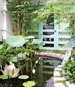 sensanvuon-1-259x300 Sen trong sân vườn