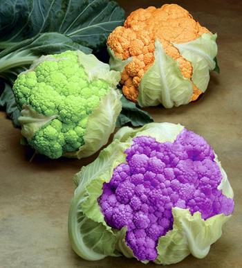 suplo-cau-vong Măng tre trong chế biến món ăn ngon