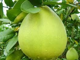 traibuoi Cách bón phân hiệu quả cho cây ăn trái