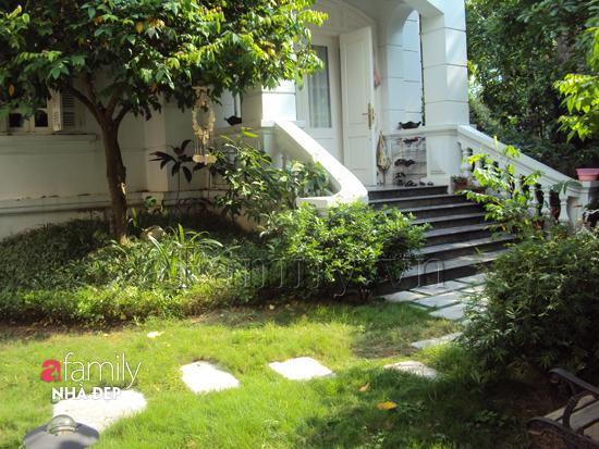 DSC04984_8854c Làm không gian trong nhà thoáng mát với cây xanh