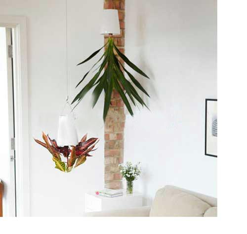 Những chậu cây treo ngược - cách trồng khá mới lạ và ngộ nghĩnh