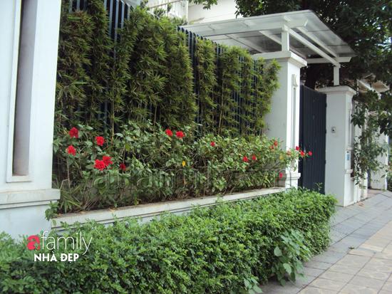 hang-rao-xanh Làm không gian trong nhà thoáng mát với cây xanh