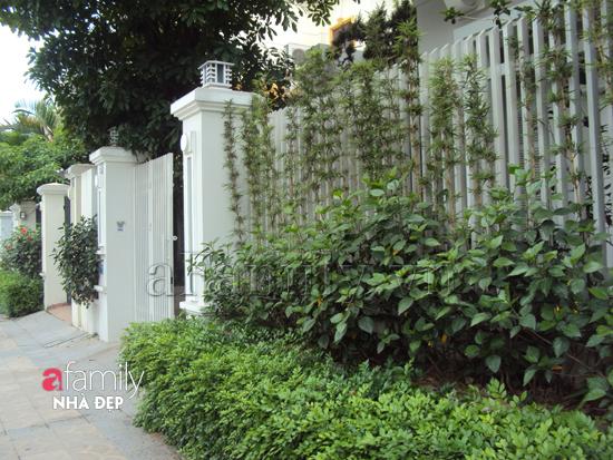 hang-rao-xanh3 Làm không gian trong nhà thoáng mát với cây xanh