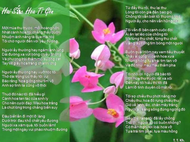tigon-15 Cây Ti gôn loài cây leo có màu hoa đẹp