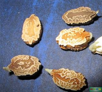 IMG_3905-001-Copy 6 bước ủ hạt giống rau trồng tại nhà