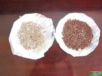 IMG_3941-Copy 6 bước ủ hạt giống rau trồng tại nhà