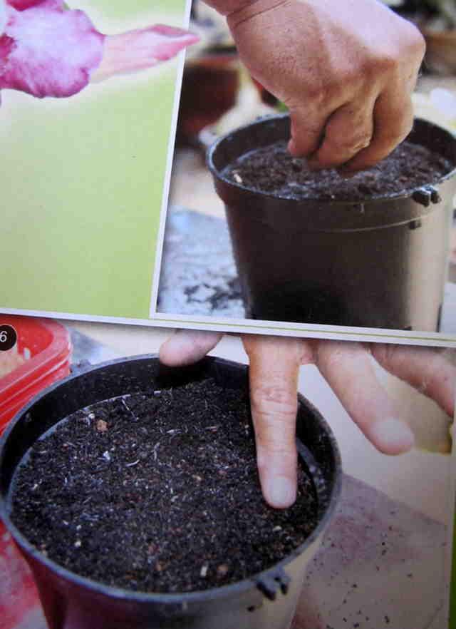 Cách gieo hạt và ghép cây - Hình 5-6