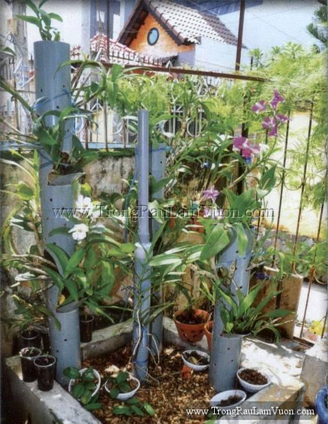 hoanh-thanh-13-Resize Cây lá màu trồng trong nước