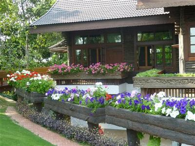 Hoa màu tím - dã yên thảo