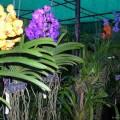 vanda-night-best-dongdau-120x120 Có những điều bạn chưa biết về rêu