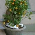 chau-tac-s-120x120 Cách chăm sóc lan hài Paphiopedilum
