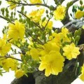 chọn hoa ngày Tết