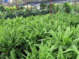 sức khỏe cây trồng