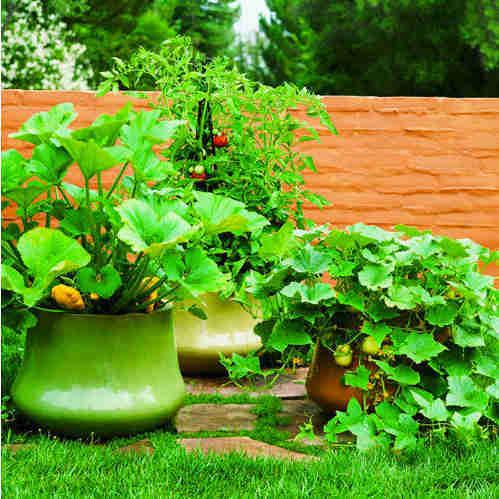 thiết kế ân vườn