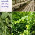 trong-day-huong-s-120x120 Hướng dẫn cách trồng củ cải trắng