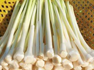 rau-bon-bon-s Công dụng của cây bồn bồn