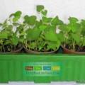 Diep-ca-giong-3-cay-2-dongdau-120x120 Cách trồng cây nha đam tại nhà