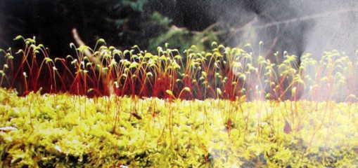 reu-to-nen Có những điều bạn chưa biết về rêu