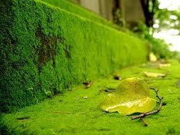 tuong-reu Có những điều bạn chưa biết về rêu