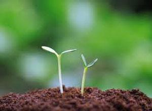 phan-trun-que Vì sao nên trồng rau sạch bằng phân trùn quế