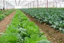 trồng rau sạch trong nhà lưới
