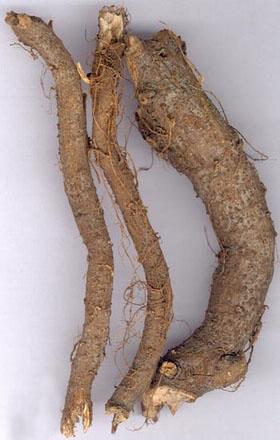 Rễ cây gai hay trữ ma căn