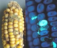 thuc-pham-moc-3 Nấm mốc trong thực phẩm nguy hiểm thế nào?