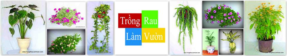 Trồng Rau Làm Vườn