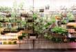 Phương pháp trồng rau trên giàn được áp dụng nhiều tại các đô thị lớn, nơi diện tích đất nông nghiệp gần như không tồn tại
