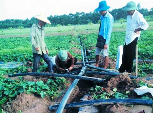 Lắp đặt đường ống dẫn nước phục vụ tưới nhỏ giọt.