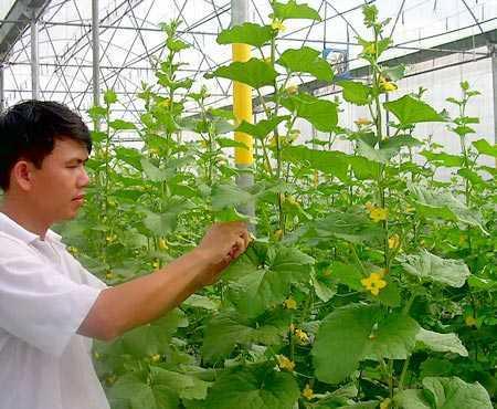 Gần 23 tỷ đồng phát triển hạ tầng khu nông nghiệp ứng dụng công nghệ cao ở Phú Yên