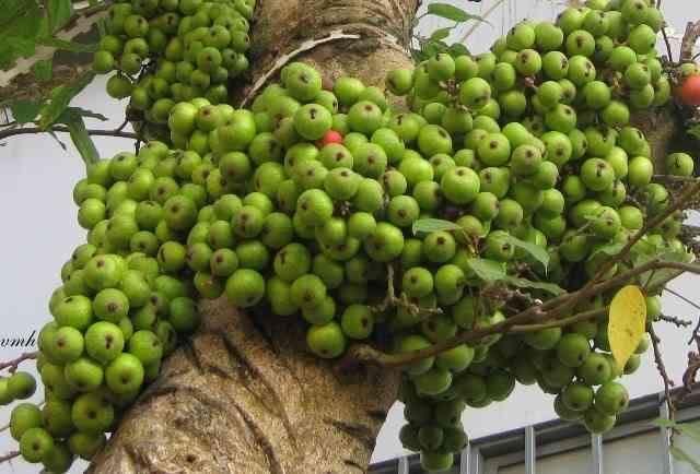 Có nhiều kỹ thuật trồng cây để kích sung ra quả. Ảnh minh họa