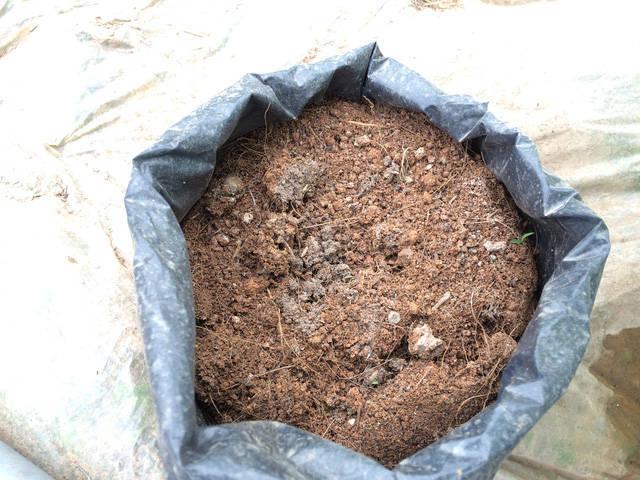 Thời điểm này cây giống đã xuất đi hết, chỉ còn dưa chuột lấy quả trồng trong nhà ươm cây giống của ông Mạnh