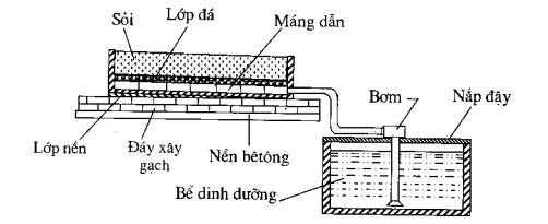 Hình 2.11. Hệ thống trống cây trong sỏi sử dụng hệ thống tưới ngầm (cung cấp trục tiếp)