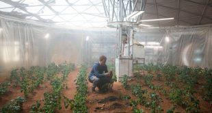 Trồng khoai tây trên sao hỏa theo bộ phim khoa học viễn tưởng Martian. Ảnh minh họa.